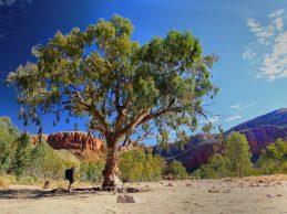 16 Day End to End Larapinta Trail Trek